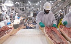 Workers in a hog slaughter and processing plant use hooks and other tools.