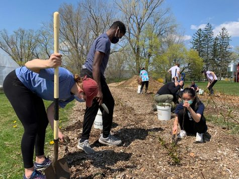 Students pull up weeds at Fairfield Farm during Eco Week.